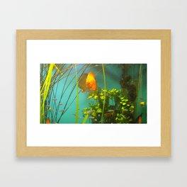 acvarium Framed Art Print