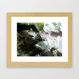 I LIKE TURTLES. Framed Art Print