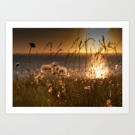 Harebells at Sunset Art Print