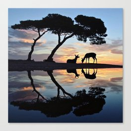 Nature reflection Canvas Print