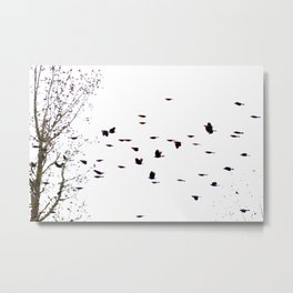 redwings in flight Metal Print