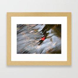 Red leaf in Stream Framed Art Print