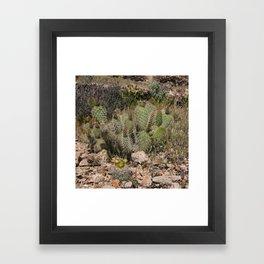 Budding Cactus Framed Art Print