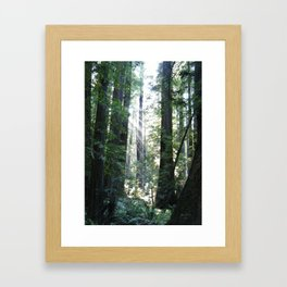 Sunbeams Through Redwoods Framed Art Print