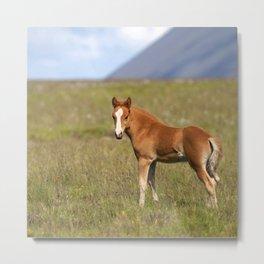 Watercolor Horse 28, Icelandic Pony, Höfn, Iceland, WhasUp? Metal Print