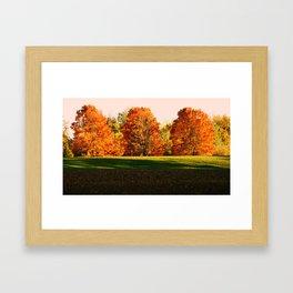 Colorful Autumn Trees Framed Art Print