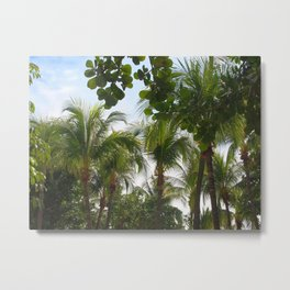 Palmtrees Metal Print
