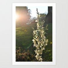 Dream of Sunlight Art Print