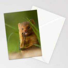 Mongoose Stationery Cards
