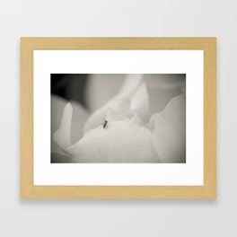 Explore like and ant Framed Art Print