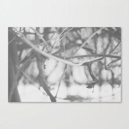 Winter Wonderland III Canvas Print
