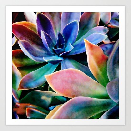 Spectacular Succulents 2 Art Print