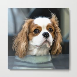 Hello Mr Doggy  Metal Print