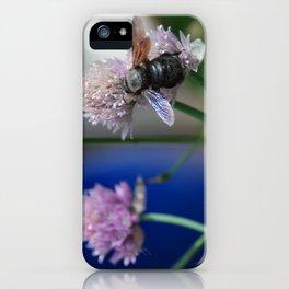 Carpenter Bee 1 iPhone Case
