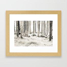 Tree Trunks II Framed Art Print