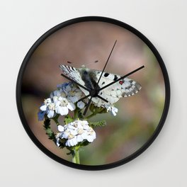 Watercolor Butterfly, Parnassian Butterfly 01, Ute Trail, RMNP, Colorado Wall Clock