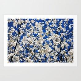 Spring Blossom V Art Print