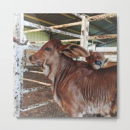 Cute Calves Metal Print