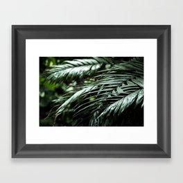 Tropical leaves 03 Framed Art Print