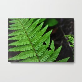 Bright Green Fern in the Forest Metal Print