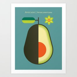 Fruit: Avocado Art Print
