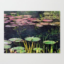 Lily Pads at Sunrise Canvas Print