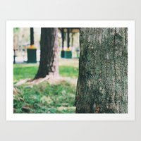 A Look Into The Forest Art Print