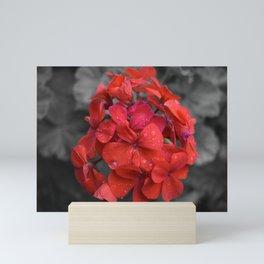 Red Geranium Tears Mini Art Print