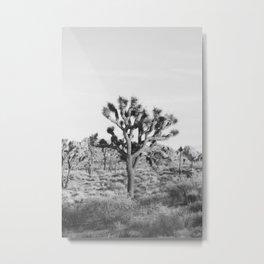 Large Joshua Tree in Black and White Metal Print