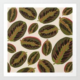 Maranta leaves Art Print