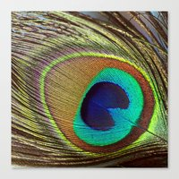 peacock feather Canvas Prints featuring Peacock Feather by Kim Bajorek