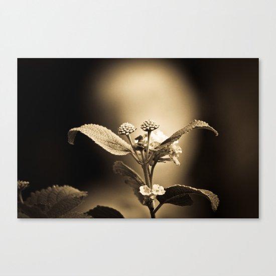 Venus in Flowers Canvas Print