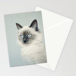 Sweet cat Stationery Cards