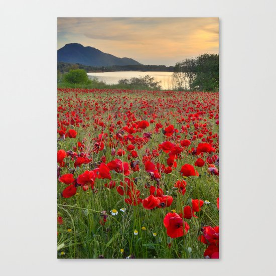 Field of poppies in the lake Canvas Print