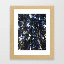 Giant trees in Aurora California Framed Art Print