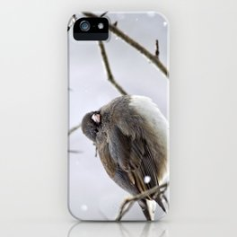 Dark Eyed Junco iPhone Case