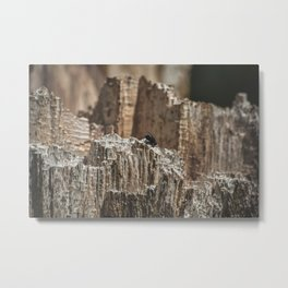 Canyon of a Fly Metal Print