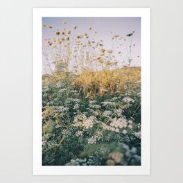 Cypriot Sunset with Queen Annes Lace Flowers Art Print