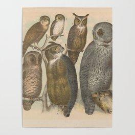 Naturalist Owls Poster