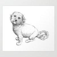 Cute Shih Tzu-Poodle cross Art Print