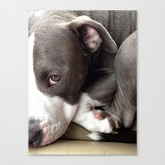 Pretty Pibble  Canvas Print