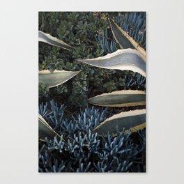 An Agave Hug Canvas Print