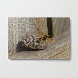 Common Wasp - Vespula Vulgaris Metal Print