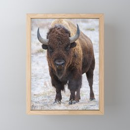 In The Presence Of Bison 2  Framed Mini Art Print