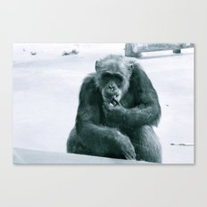 Monkey See Canvas Print