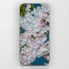 Underneath A Cherry Tree iPhone Skin