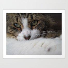 Dreamy Cat Art Print