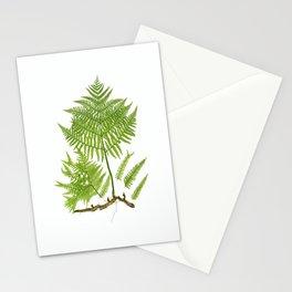 Pteridium aquilinum  byThomas Moore Stationery Cards