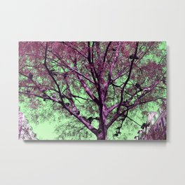Parisian tree pigeon Metal Print