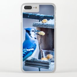 Blue Jay and the nuts Clear iPhone Case